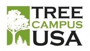 tree campus 2